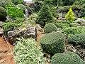 Kunming Botanical Garden - DSC03041.JPG