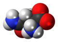 L-Asparagine-zwitterion-3D-spacefill.png