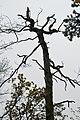 LSG Sudmerberg - Bäume (8).jpg