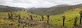 La Gomera 28 (8561277558).jpg