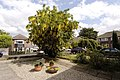 Laburnum tree in Orford Road - geograph.org.uk - 53454.jpg