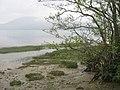 Lake shore vegetation - geograph.org.uk - 1554125.jpg