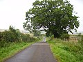 Lane leading to West Horton - geograph.org.uk - 517130.jpg