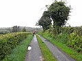 Lane near Drummany Lough - geograph.org.uk - 1304192.jpg
