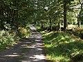 Lane past Newcourt Wood - geograph.org.uk - 577060.jpg