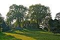 Le Château de Penthes et les deux arbres à Pregny-Chambésy.jpg