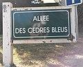 Le Touquet-Paris-Plage 2019 - Allée des Cèdres Bleus.jpg