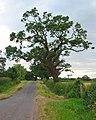 Leaning tree, Holtridge - geograph.org.uk - 190321.jpg