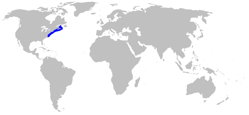 File:Leucoraja erinacea rangemap.png