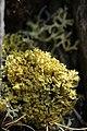Lichen (20588090335).jpg