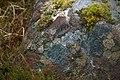 Lichen on Tanera Mòr - geograph.org.uk - 435676.jpg