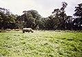 Longleat Safari Park, Warminster - panoramio (1).jpg