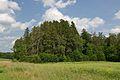 Loodi lehisepuistu (Larix decidua).jpg