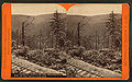 Looking through the wilderness, on the Bell's Gap R. R, by R. A. Bonine.jpg