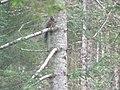 Lorenzago scoiattolo.JPG