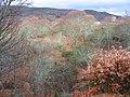 Los castaños en invierno - panoramio.jpg