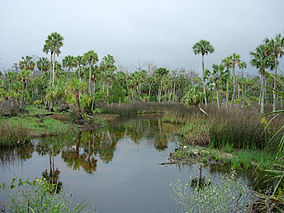 Lower Suwannee National Wildlife Refuge.jpg