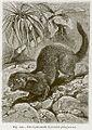 Lyncodon patagonicus 1880.jpg