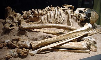 Magdalenian Girl - Skeleton of the Magdalenian Girl, an early modern human from the Magdalenian period, discovered in the Cap Blanc rock shelter