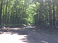May 2018, Woodland Trails Scout Camp3.jpg