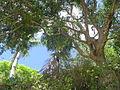 Mayotte, Petite Terre (2850837100).jpg