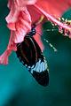 Me like flowers (14531019329).jpg