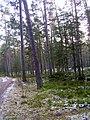 Mezs druvciema - panoramio.jpg