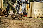 Military working dogs in Guam.jpg