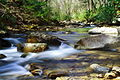 Mill-Creek-Spring ForestWander.JPG