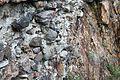 Monjak Fortress PD 2011 098.JPG