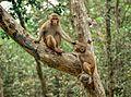 Monkeys are very friendly in sundarbans.jpg