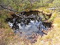 Moorgebiet im NP Bayerischer Wald.jpg
