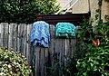 Mops in Color - Flickr - Gayle Nicholson.jpg