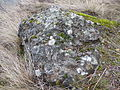 Mosses and lichens on a boulder in Knox Mountain Park during winter.jpg