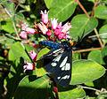 Moth Rick Ahrens (7692406914).jpg