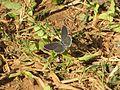 Moth grass.jpg
