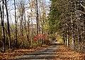 Mount Kisco, New York Access Road in Autumn.jpg