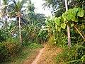 Munderi Motta, Kannu, Kerala, India.jpg