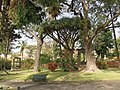 Museu Quinta das Cruzes, Funchal, Madeira - IMG 8431.jpg