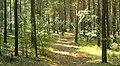 Mushroom forest - panoramio.jpg