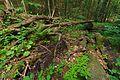 Národná prírodná rezervácia Stužica, Národný park Poloniny (14).jpg