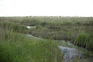 Raised bog - Ewiges Meer Nature Reserve, raised bog element of the remains of a bog in East Frisia