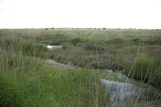 Raised bog - Ewiges Meer Nature Reserve, raised bog element of the remains of a bog in East Frisia