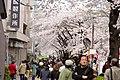 Nakameguro 2009-04-05 (3448457201).jpg
