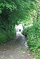 Narrow Devon lane, near Stokenham. - geograph.org.uk - 824334.jpg