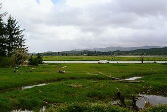 Freshwater marsh - Freshwater marsh, Naselle River, Washington