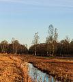 Nationaal Park Weerribben-Wieden. Slootjes in rietvelden.jpg