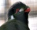 National Aviary (13020190023).jpg