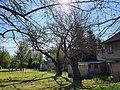 Naturdenkmale Maulbeerbaum 3 und 4 Caminchen (1).jpg