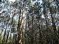 Nature's bard.jpg